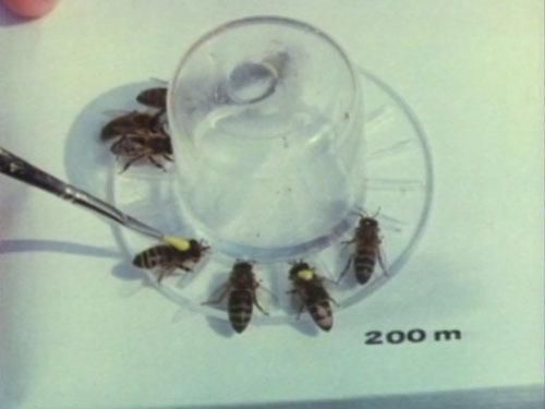 昆虫類・節足動物