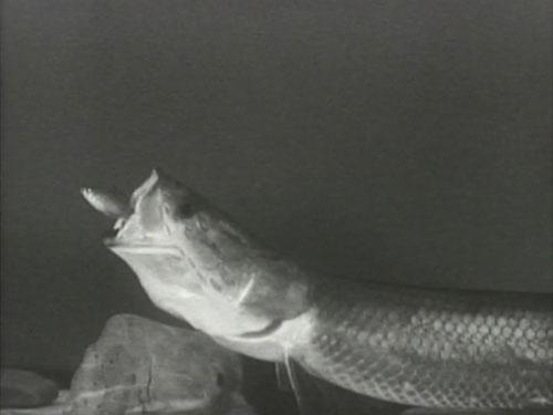 魚類・軟体動物